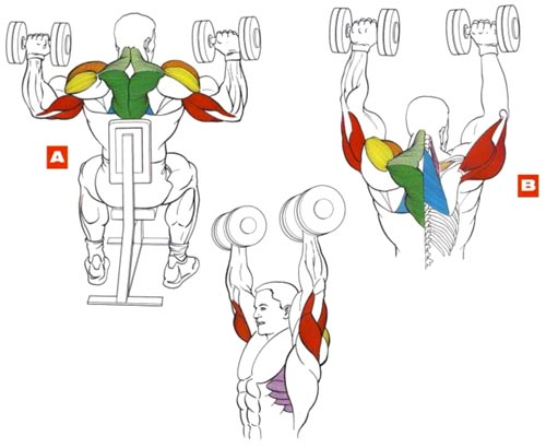 Мышцы плеча упражнения в домашних условиях