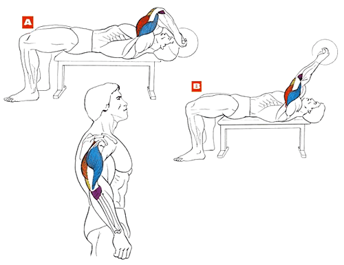 Упражнение на трицепс и бицепс в домашних условиях 28