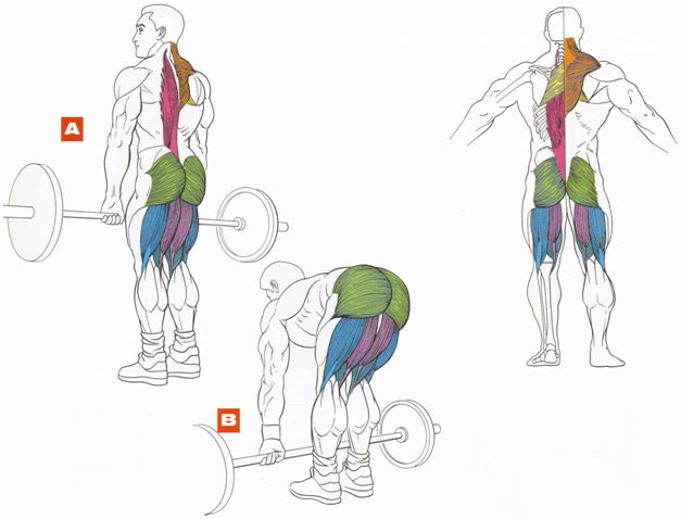 тренировка ног анатомия