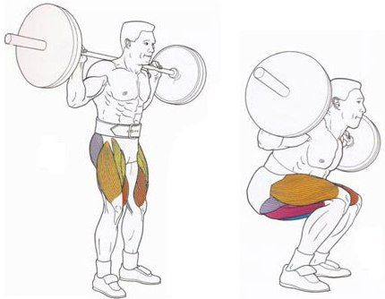 мышцы приседания со штангой