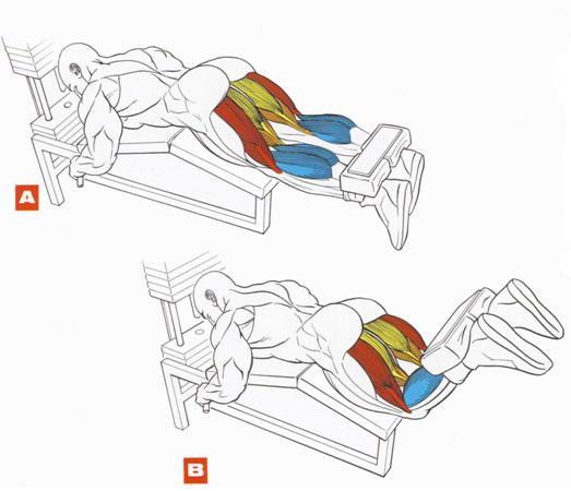 сгибание ног на тренажере мышцы тренировка мышц ног