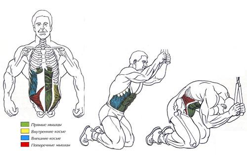 мышцы скручивания на верхнем блоке