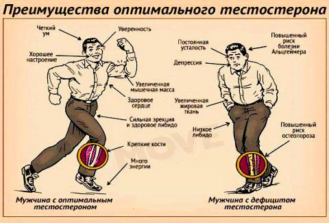 значение тестостерона для мужчины