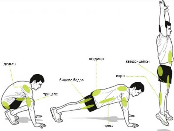 какие мышцы работают при берпи