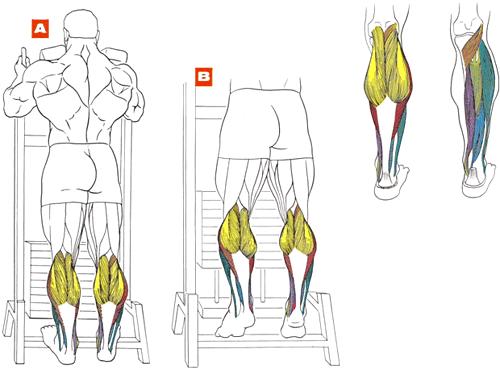мышцы икры тренировка