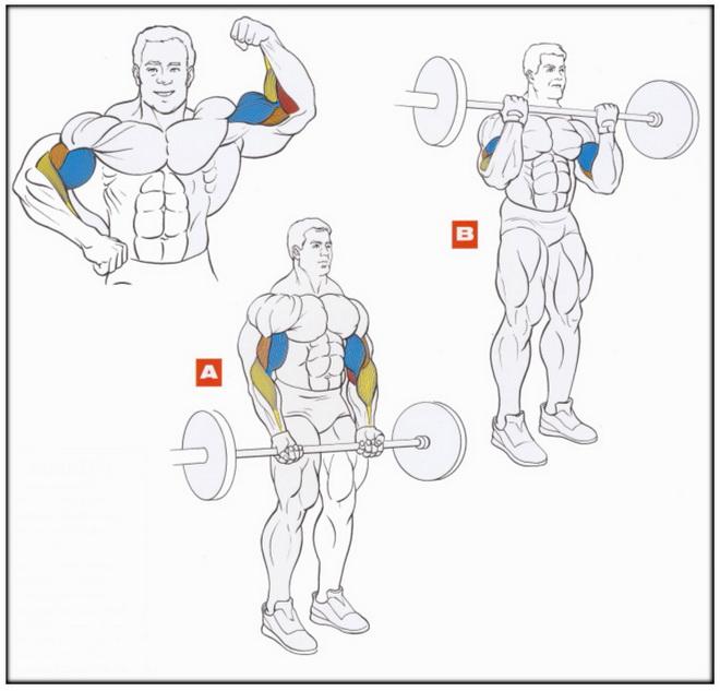 упражнения для тренировки бицепса