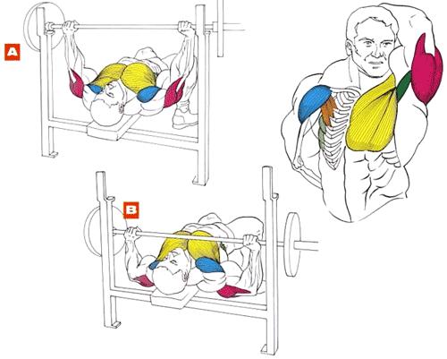 тренировка грудных мышц жим