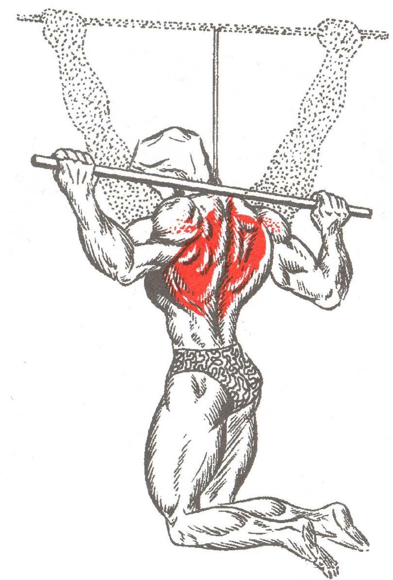 Подтягивания за голову анатомия